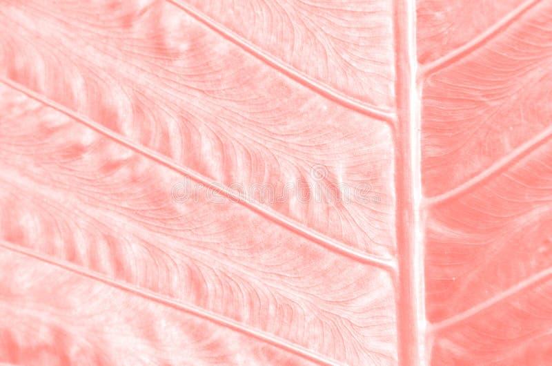 Fim acima do fundo da folha da árvore, tonificado na cor coral de vida fotografia de stock