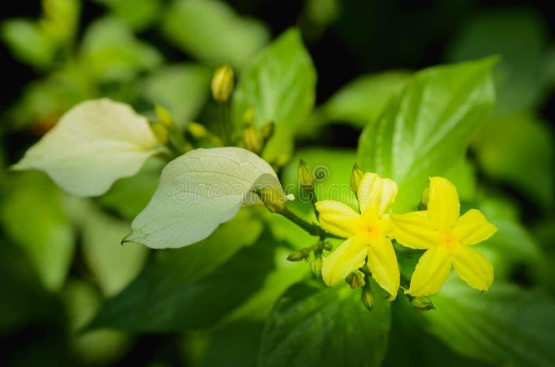 Fim acima do raio de luz da manh? na flor bonita com fundo verde das folhas imagem de stock royalty free