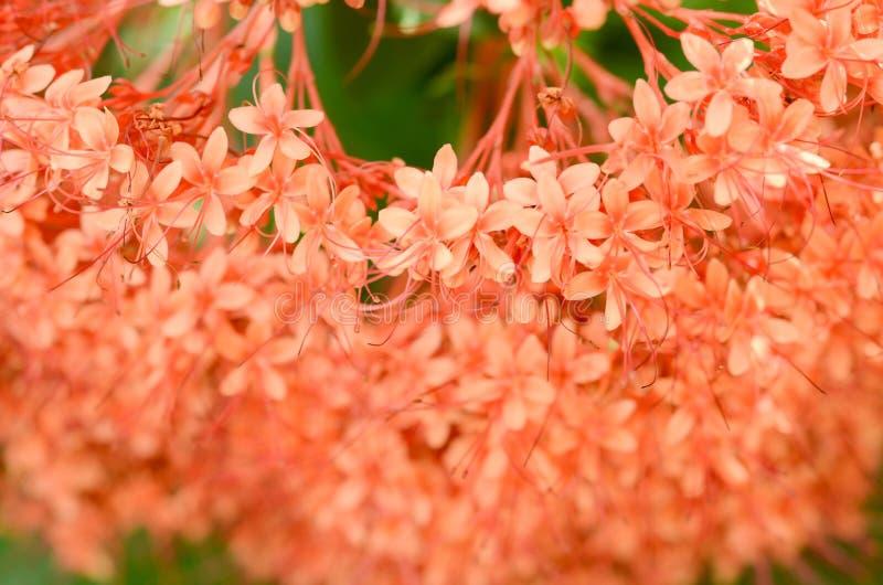 Fim acima do raio de luz da manh? na flor bonita com fundo verde das folhas imagens de stock