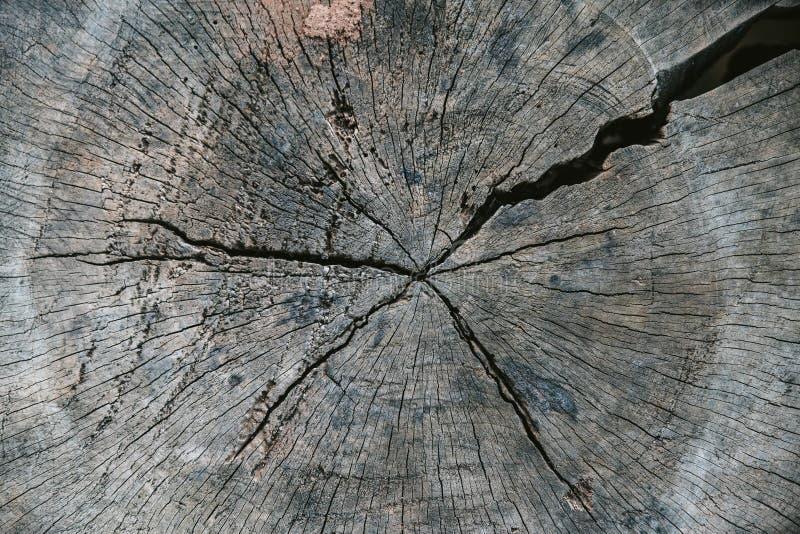 Fim acima do tronco de ?rvore cortado com quebra velha na vila de Akha de Maejantai no monte em Chiang Mai, Tail?ndia Textura abs fotos de stock