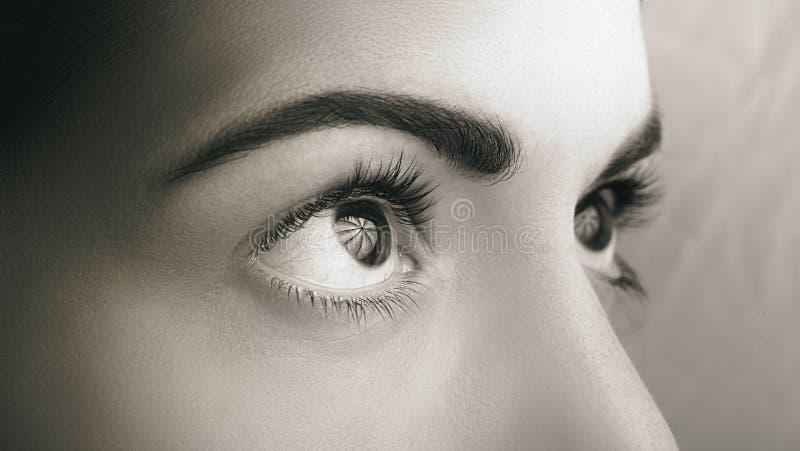 Fim acima dos olhos escuros com a composi??o natural que olha o lado, tiro macro imagem de stock royalty free