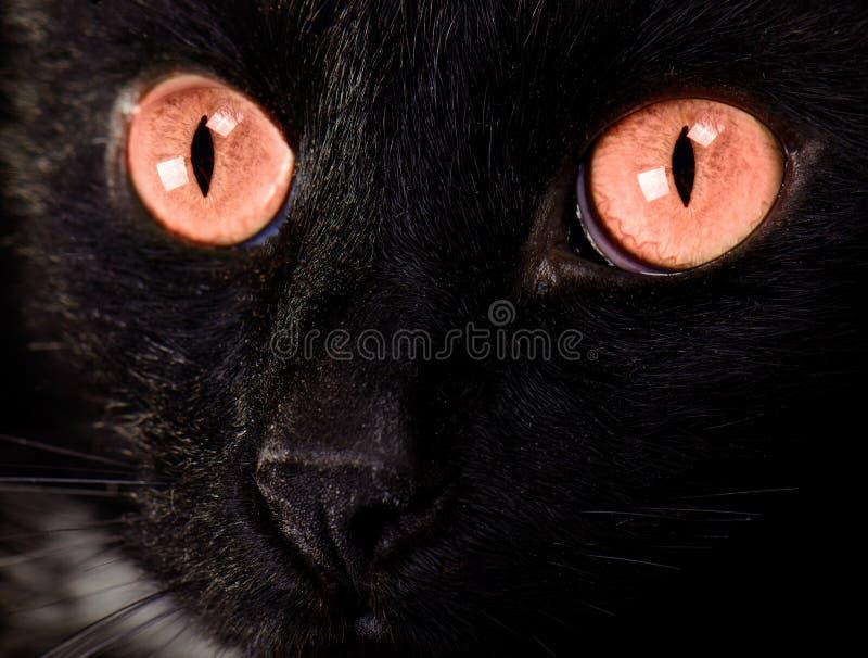 Fim bonito da face do gato preto acima foto de stock