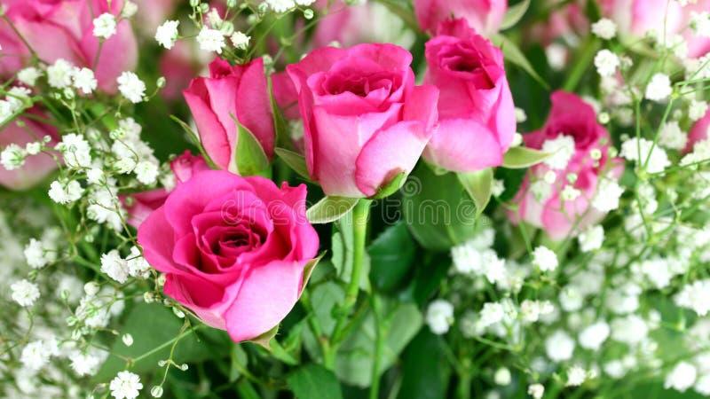 Fim cor-de-rosa do ramalhete das rosas acima foto de stock