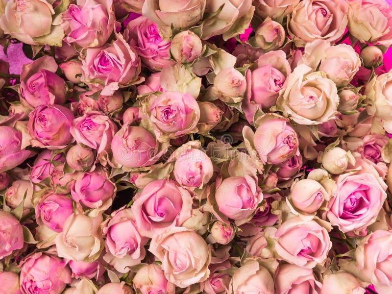 Fim cor-de-rosa pequeno do ramalhete das rosas acima imagens de stock royalty free