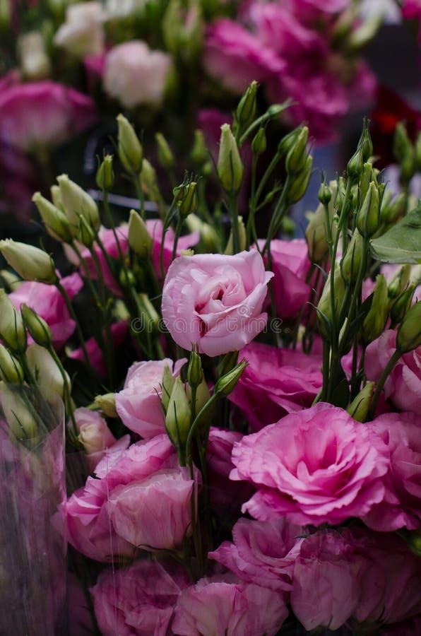 Fim cor-de-rosa pequeno do ramalhete das rosas acima Flores bonitas imagens de stock