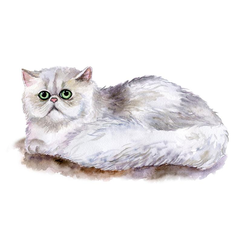 Fim da aquarela acima do retrato da raça longhair branca bonito do gato persa isolada no fundo branco Olhos esmeraldas M?o tirada ilustração royalty free