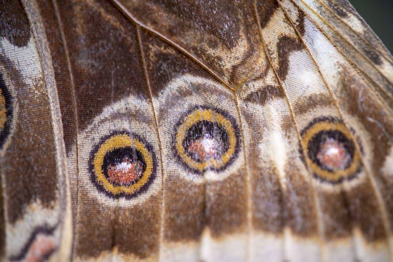 Fim da borboleta acima da textura do detalhe da asa imagem de stock