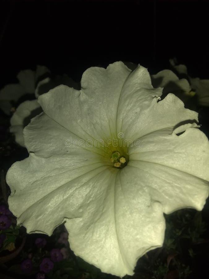 Fim da flor branca acima da gota traseira preta fotos de stock