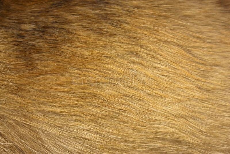 Fim da pele do cão acima imagens de stock