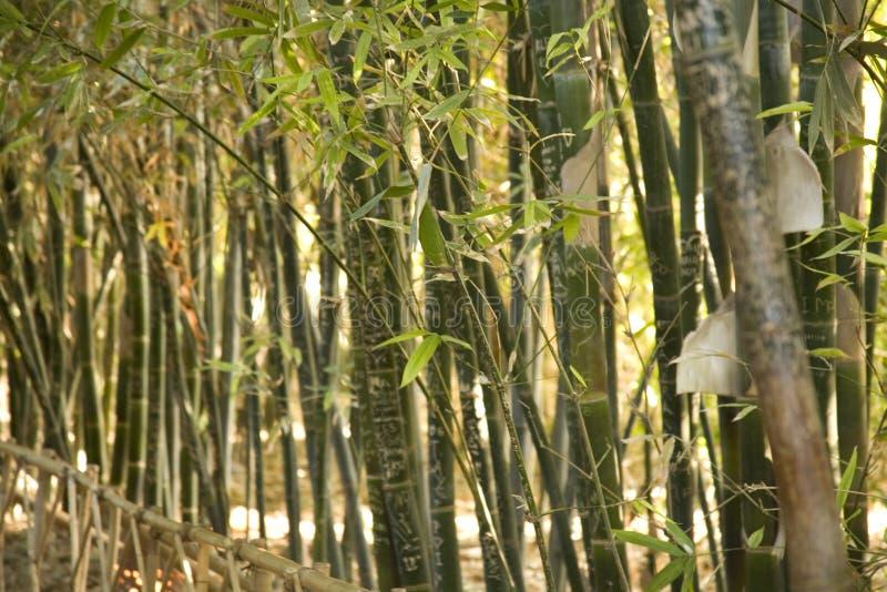Fim de bambu da conversão acima imagens de stock royalty free