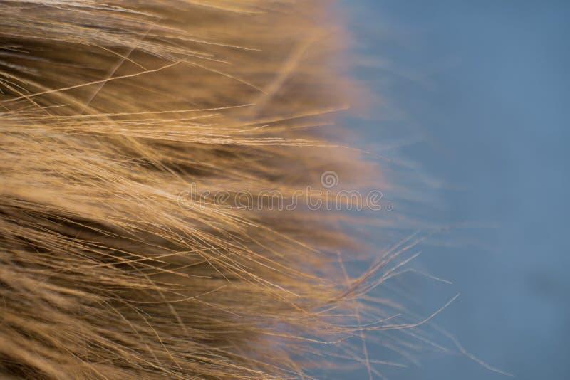 Fim de bambu da textura do fundo da vassoura da grama de Tailândia acima foto de stock