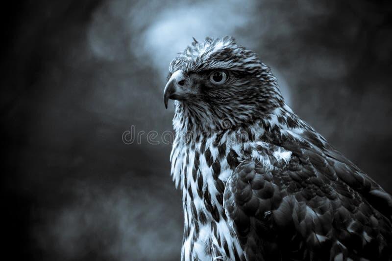 Fim de Eagle acima fotografia de stock royalty free