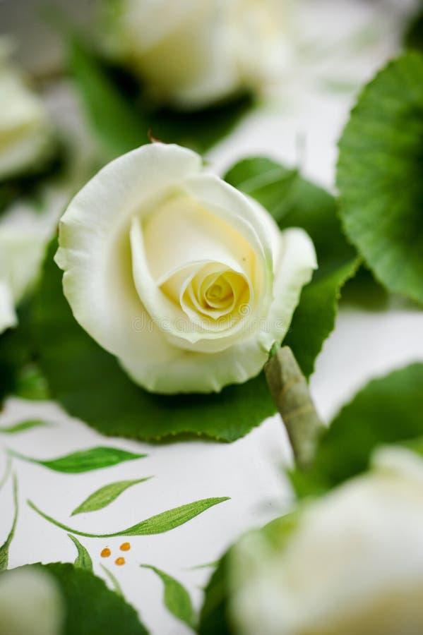 Fim de florescência da rosa do branco acima foto de stock royalty free