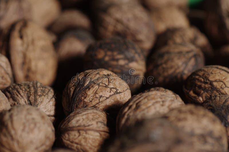 Fim de Wallnuts acima imagens de stock