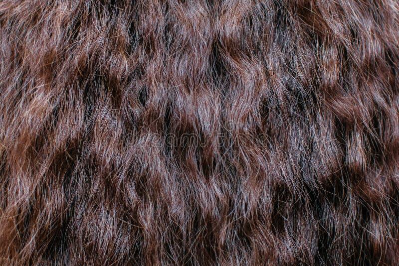 Fim do cabelo de Brown acima texturas e fundo fotografia de stock royalty free