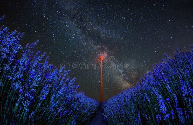 Fim do campo de flor da alfazema acima do detalhe na noite do verão imagem de stock