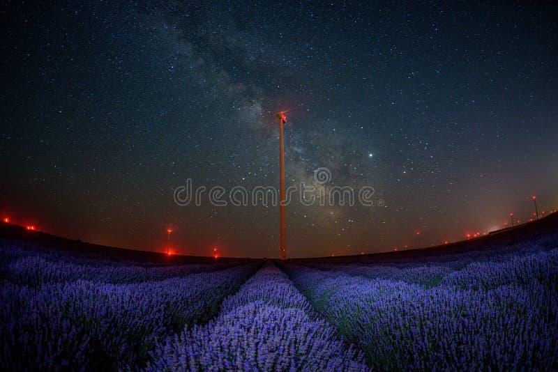 Fim do campo de flor da alfazema acima do detalhe na noite do verão imagem de stock royalty free