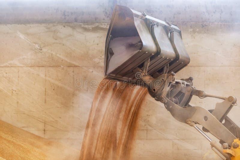 Fim do carregador da roda acima, areia de carregamento da máquina escavadora no canteiro de obras imagem de stock