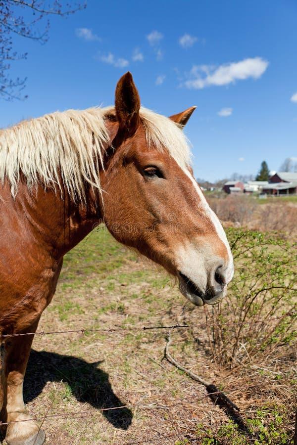 Fim do cavalo de Brown acima imagens de stock