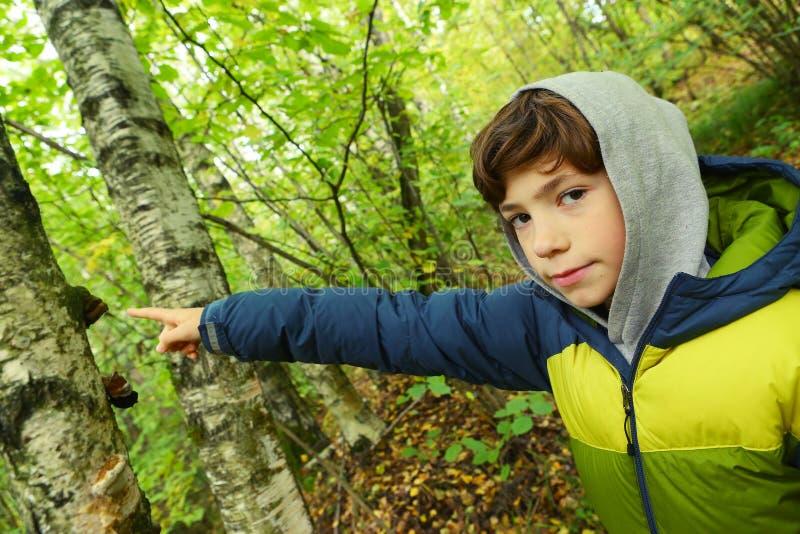 Fim do menino do Preteen acima do retrato na floresta do outono fotografia de stock royalty free