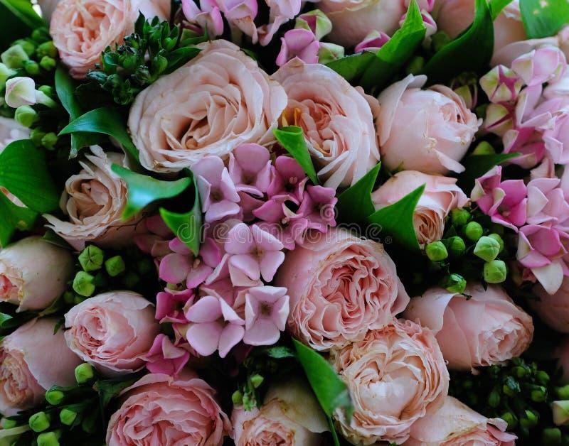 Fim do ramalhete de Rosa acima do fundo foto de stock royalty free