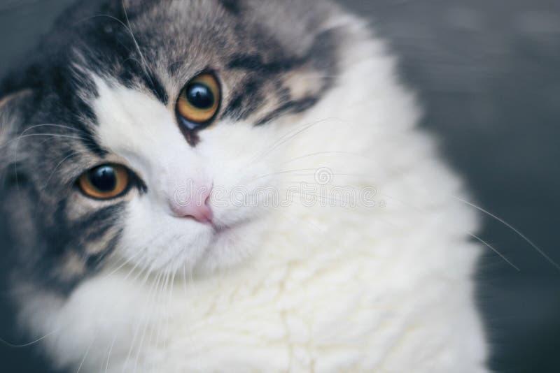 Fim do retrato do gato acima fotos de stock