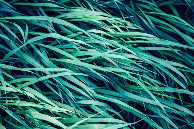 Fim do sumário do fundo da grama verde acima imagem de stock royalty free