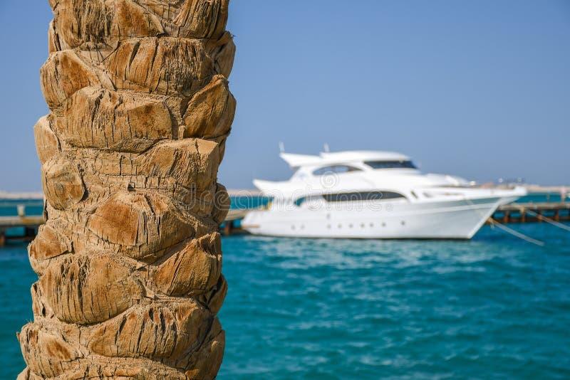 Fim do tronco de palmeira acima na praia com o iate caro branco grande fotografia de stock