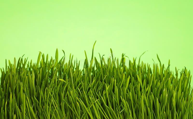 Fim fresco da grama da mola acima do baixo ângulo sobre o verde imagem de stock royalty free