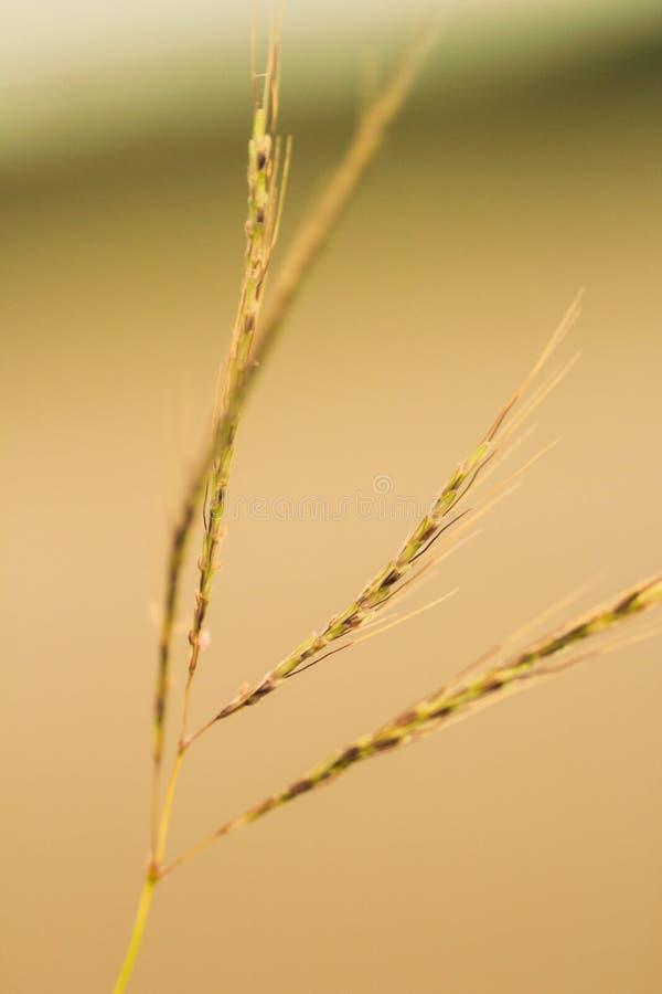 Fim macio da grama acima fotos de stock