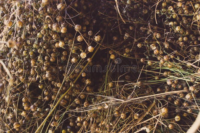 Fim marrom seco da grama acima Contexto da palha Feno seco textured Comcept da agricultura foto de stock
