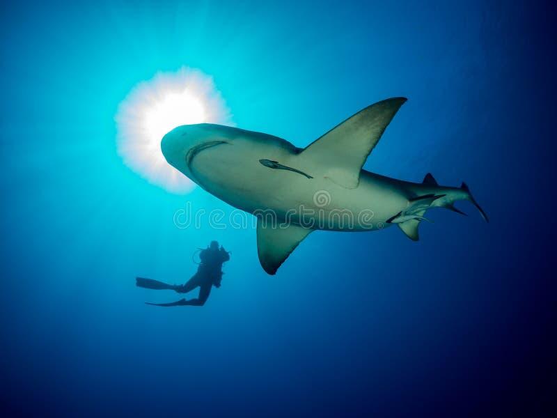 Fim oceânico da nadada do tubarão em torno do mergulhador de mergulhador no fundo azul do oceano fotografia de stock royalty free