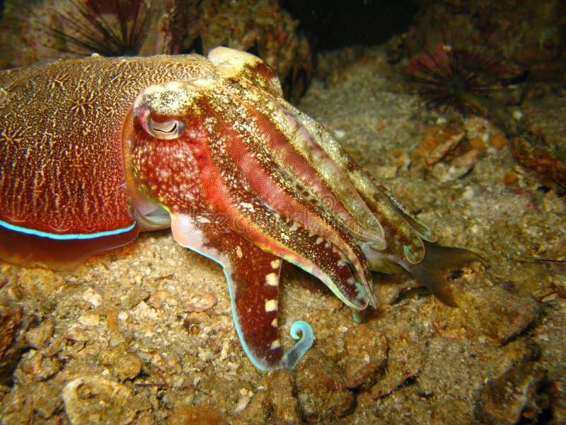 Fim tropical da criatura do mar acima fotos de stock