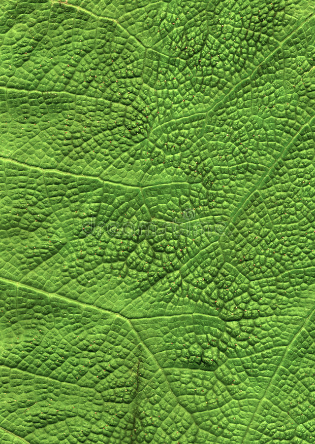 Fim verde da folha acima do fundo imagem de stock