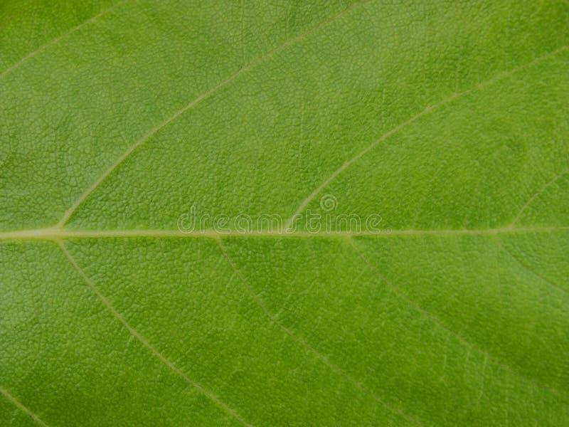Fim verde da folha da árvore acima foto de stock
