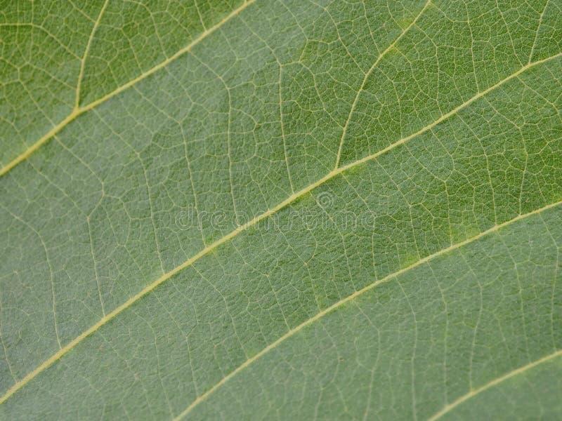 Fim verde da folha da árvore acima imagem de stock