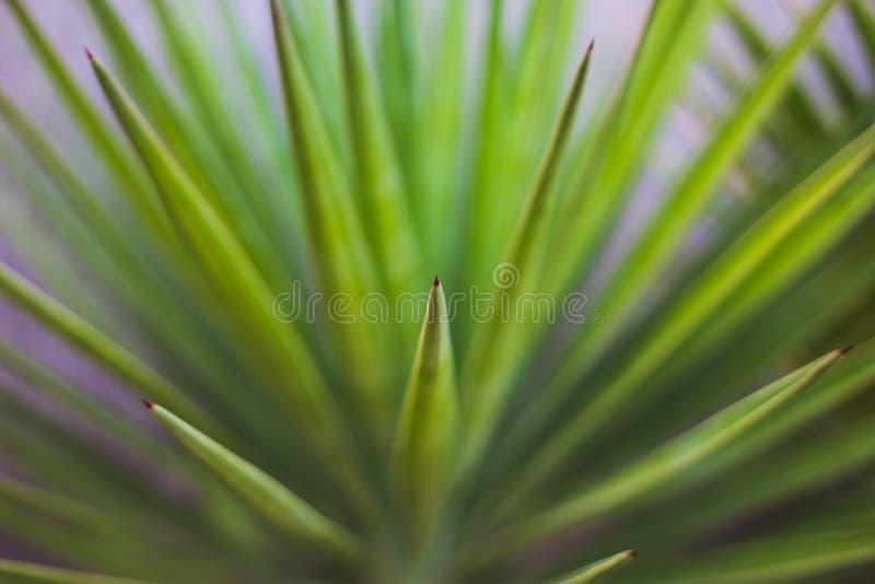 Fim verde da folha da palmeira acima imagem de stock