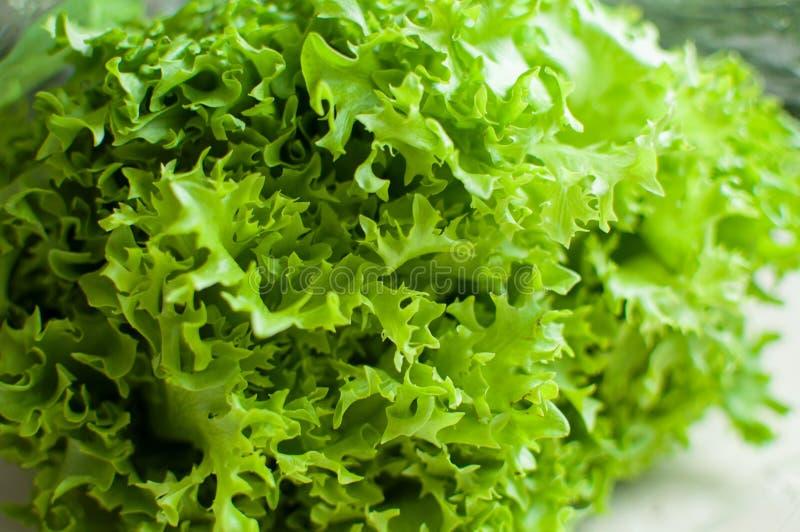 Fim verde orgânico cru da salada do frisee acima fotografia de stock royalty free