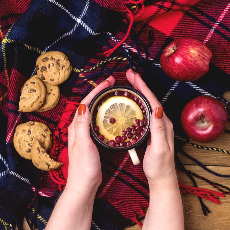 Fimale手拿着杯热的秋天早餐羊毛Blamket木Backgro的莓果柠檬茶曲奇饼红色苹果概念 免版税库存图片