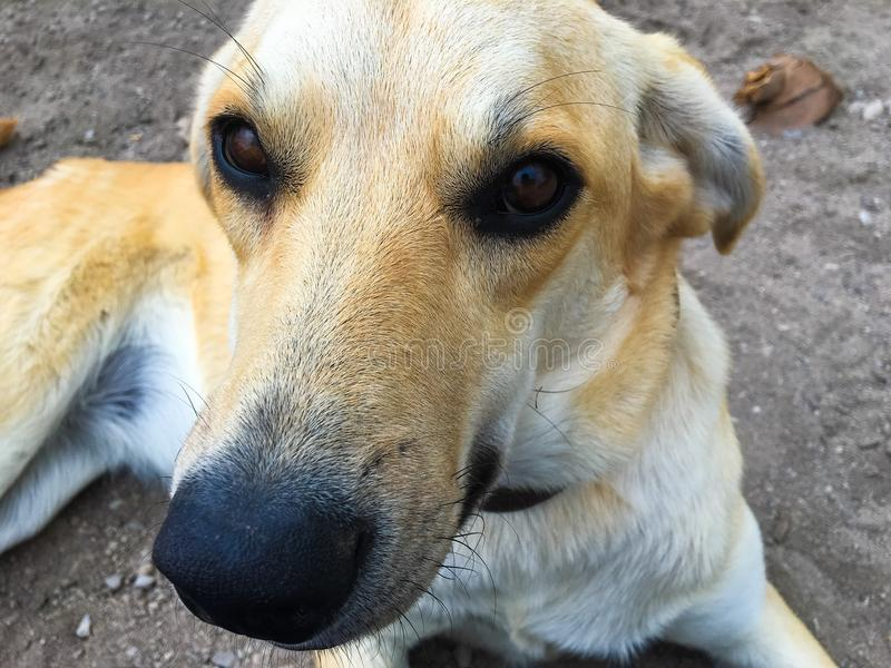 Fin équatorienne de visage de chien  images stock
