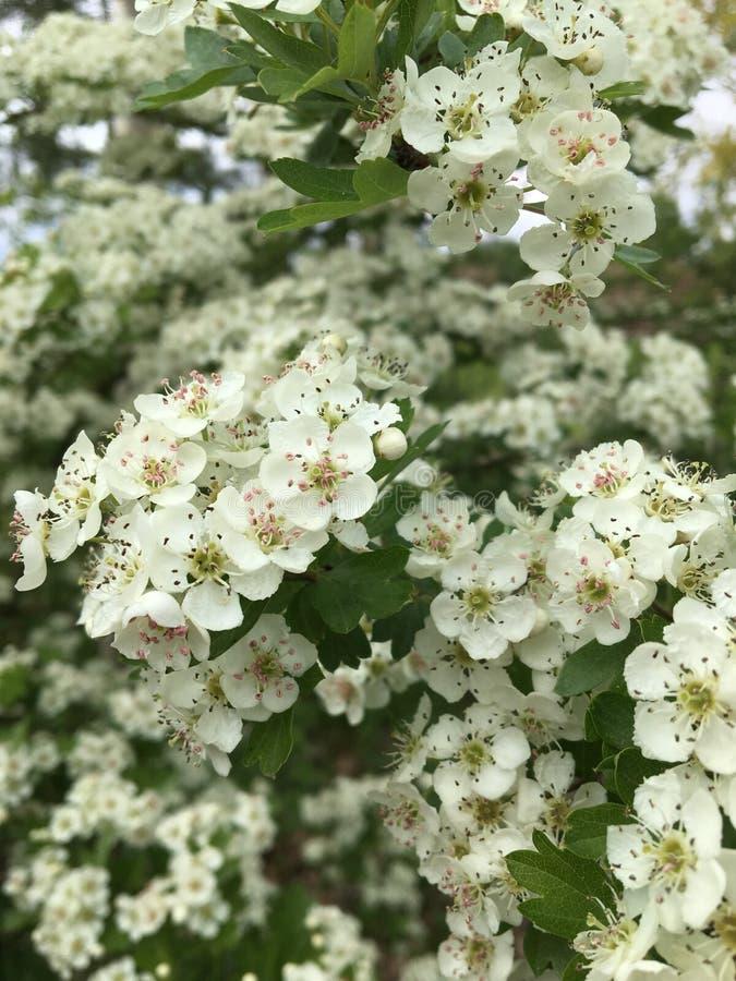 Fin blanche de vert de nature de fleurs images stock