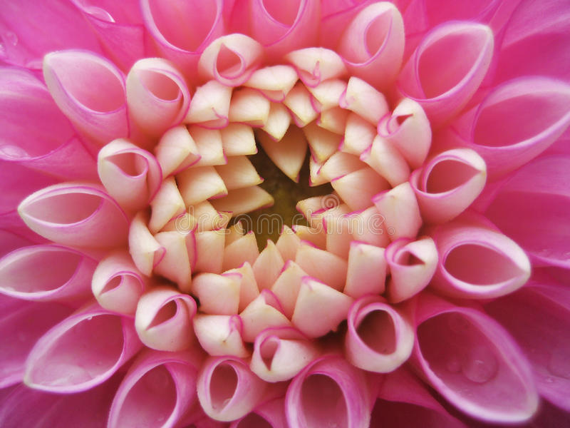 fin blomma royaltyfri fotografi