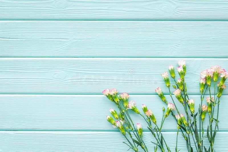 fin blommafjäder Liten rosa nejlika på utrymme för bästa sikt för bakgrund för blå turkos träför text arkivbild
