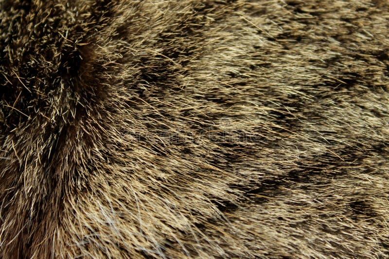 Fin brouillée de fourrure de Brown  Textures abstraites de fond d'animaux photographie stock