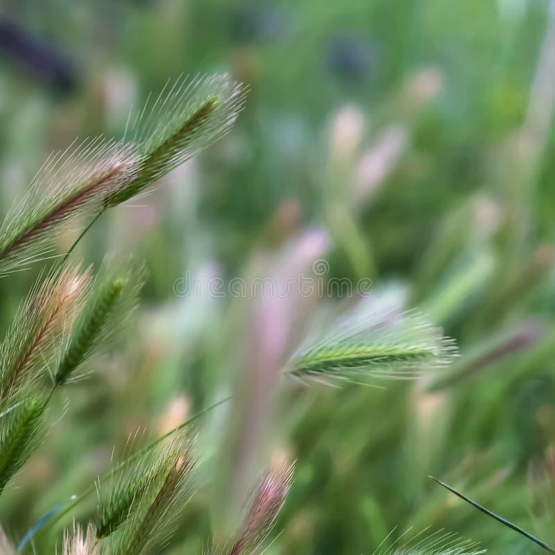 Fin carrée de cadre vers le haut de la vue des herbes vertes luxuriantes s'élevant dans la région sauvage de forêt photos libres de droits