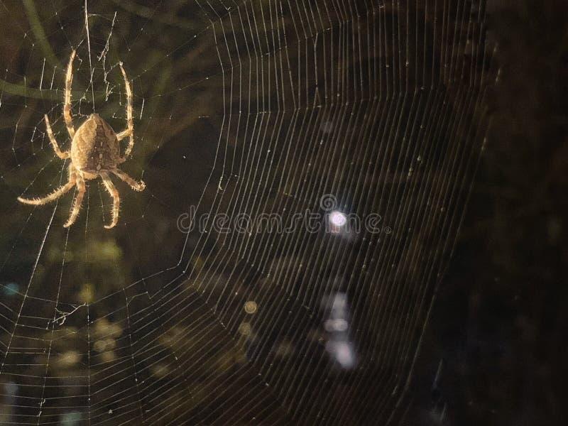 Fin d'araignée vers le haut d'image de nuit image libre de droits