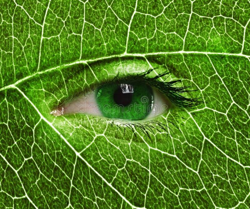 Fin d'oeil vert haute et texture de feuille images stock