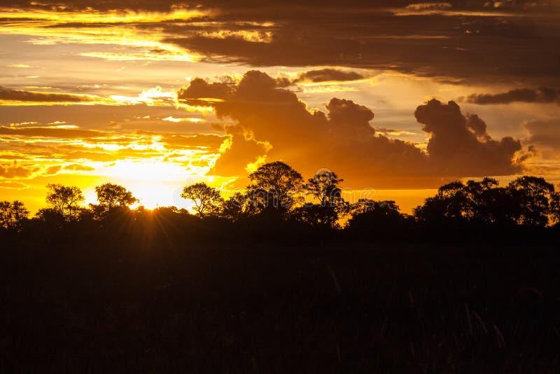 Fin d'un Safari-jour, coucher du soleil derrière des arbres en Afrique photos stock
