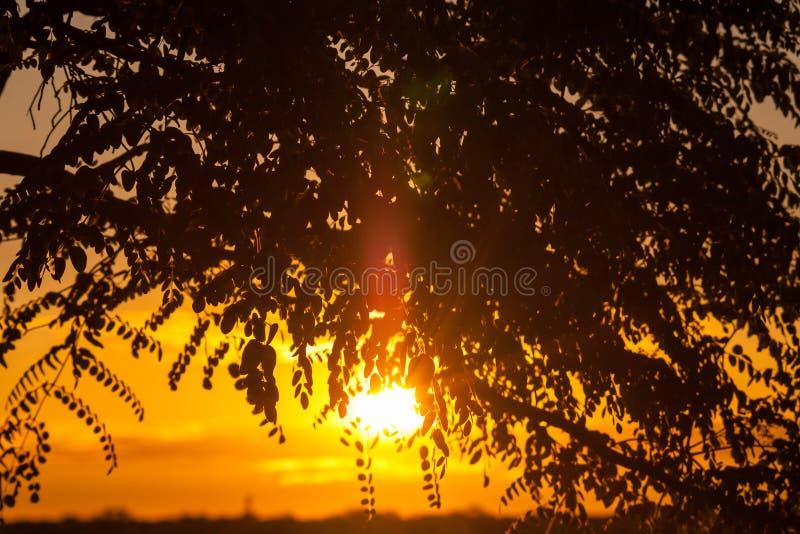 Fin d'un Safari-jour, coucher du soleil derrière l'arbre en Afrique images stock