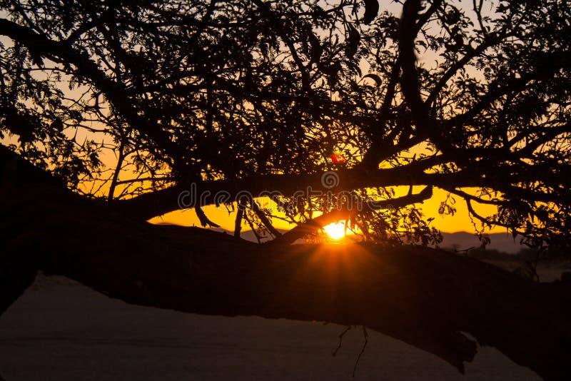 Fin d'un Safari-jour, coucher du soleil derrière l'arbre en Afrique photos stock